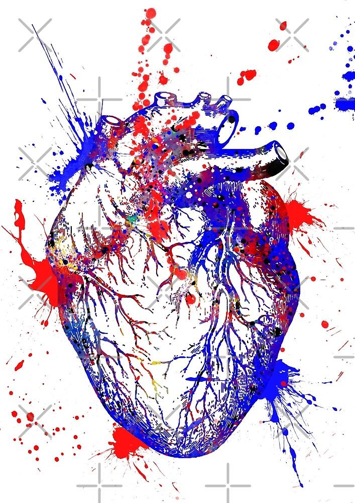 Human heart, heart anatomy, medical art, watercolor heart, heart ...