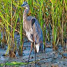 Great Blue Heron in the Tall Grass by TJ Baccari Photography
