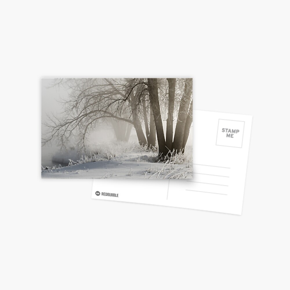 Etched By Snow - Sawhill Carvings Postcard