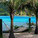 Tropical Hammocks by DARRIN ALDRIDGE