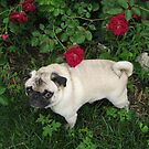 Wild Roses-Iowa State Flower With Nevada by Linda Miller Gesualdo