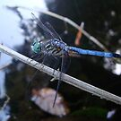 In the shade with a blue dragonfly by May Lattanzio