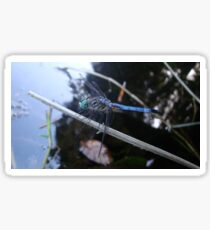 In the shade with a blue dragonfly Sticker