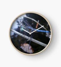 In the shade with a blue dragonfly Clock