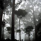 Treescape in B & W by medley