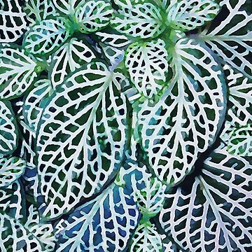 Tropical Nerve Mosaic Plant Fittonia Leaves by MenegaSabidussi