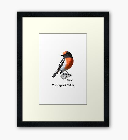 Red-capped Robin male Framed Print