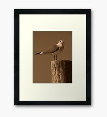 Bird's View ~ Part One Framed Print