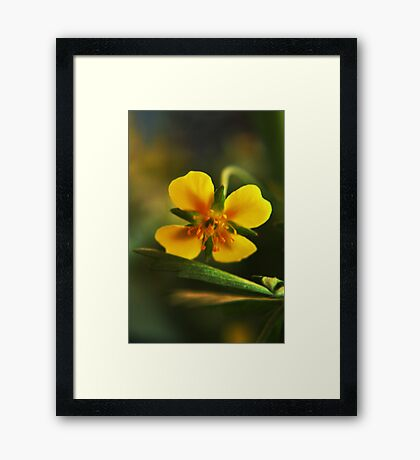 I am Yellow (from willd flowers collection) Framed Print