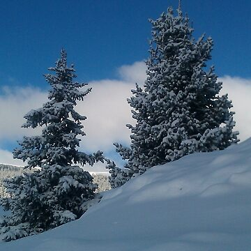 Snowy Trees by shawphotography