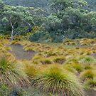 Grassland by Werner Padarin