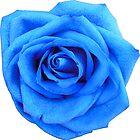 Blue Rose by My-EventHorizon