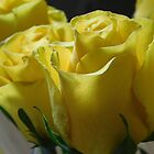 Yellow Rose Series - 2     ^ by ctheworld