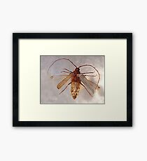 Weta......been around long enough to see Dinosaurs come and go.....!! Framed Print
