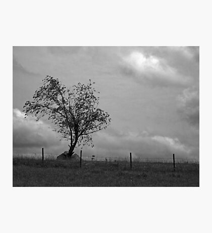Standing Alone! Photographic Print