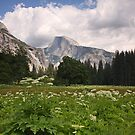 Yosemite-Half Dome by CherylBee