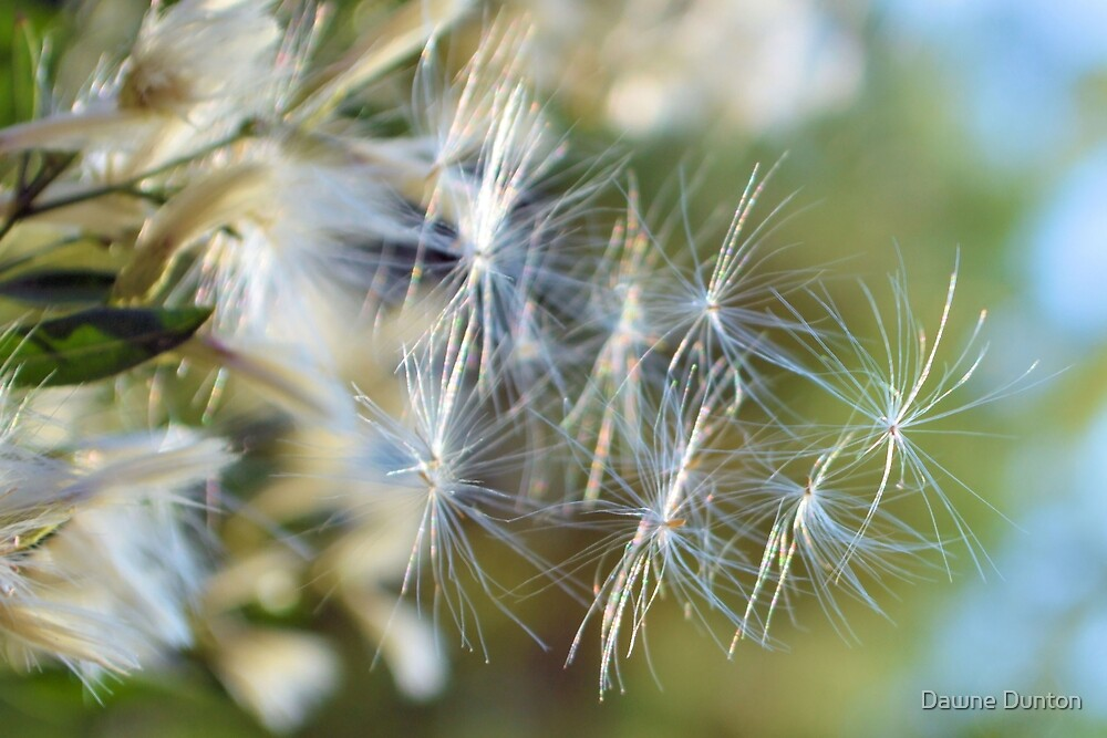 Make A Wish by Dawne Dunton