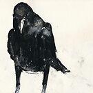Australian Raven  by WoolleyWorld