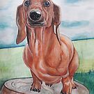 Max2 dachshund by GalinaM
