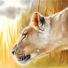 The African Queen, Lioness Big Cat by Peter Williams