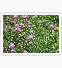 Beautiful Thistles  Sticker