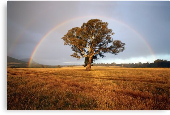 After the Rain, Dunkeld, Australia by Michael Boniwell