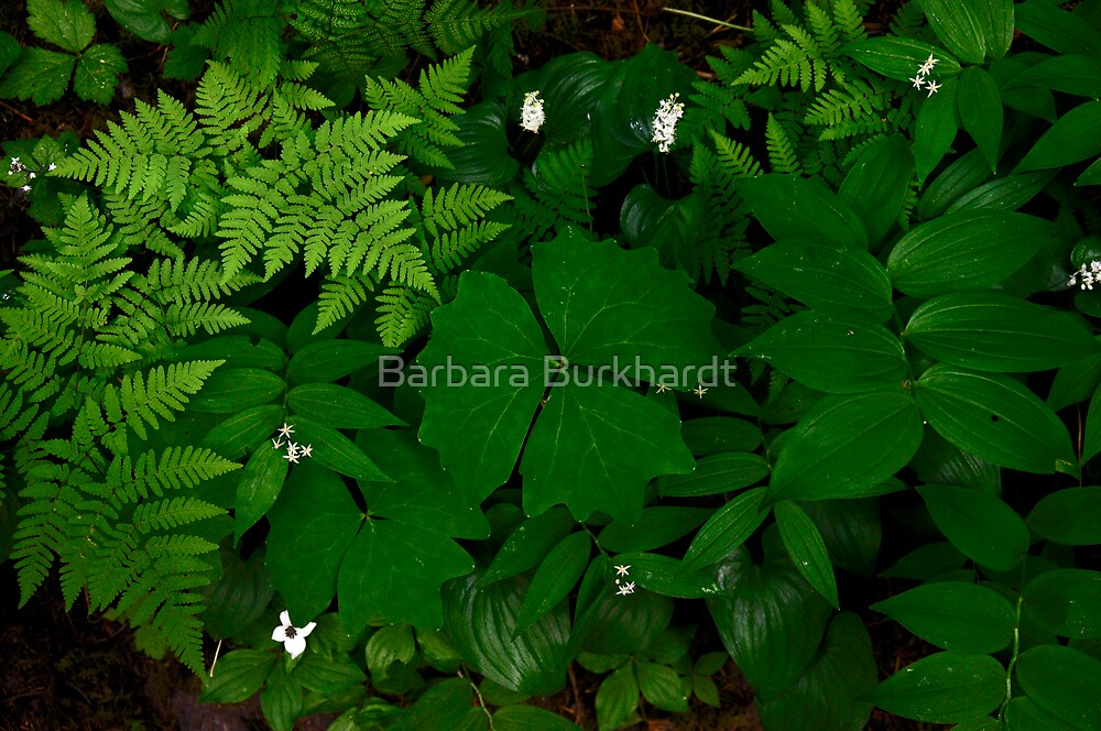 Deep Green by Barbara Burkhardt