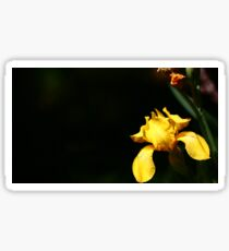 yellow flower with black background Sticker