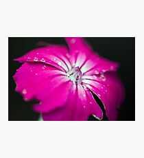 Macro flower with droplets of water Photographic Print