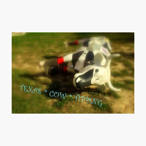 TEXAS COW ~ TIPPING ! ( JUST SAY NO...) Photographic Print
