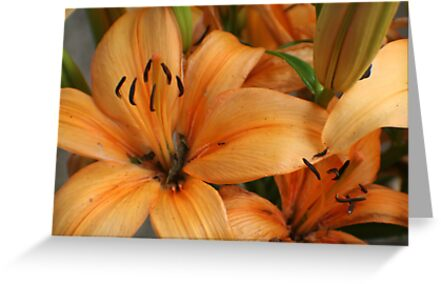 Lilies and Ants by Karen K Smith