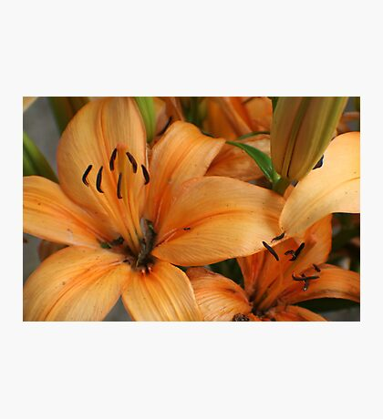 Lilies and Ants Photographic Print
