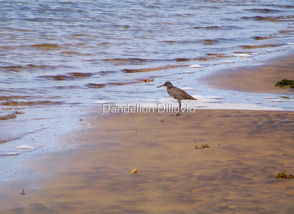 Beach Comber by Dandelion Dilluvio