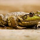 Frog or Prince? by Buckwhite