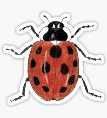 Ladybird Beetle - Ladybug Sticker