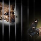 A shelter dog's dream by Christina Brundage