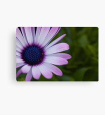 Purple Gerbera Daisy Leinwanddruck