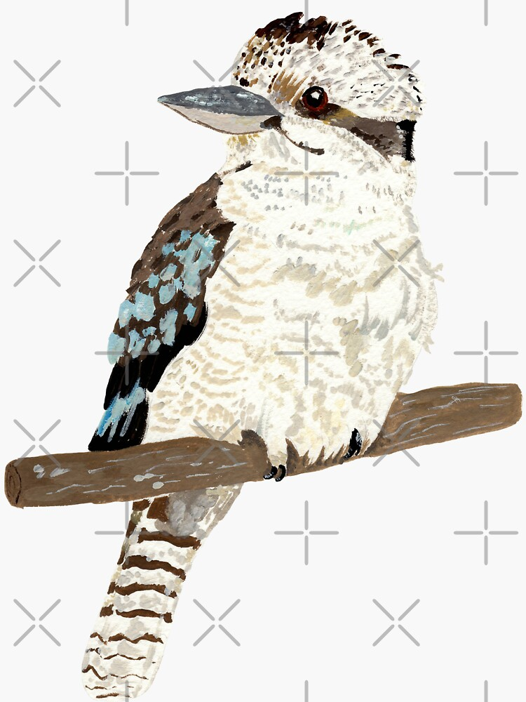 kookaburra  by ellietography