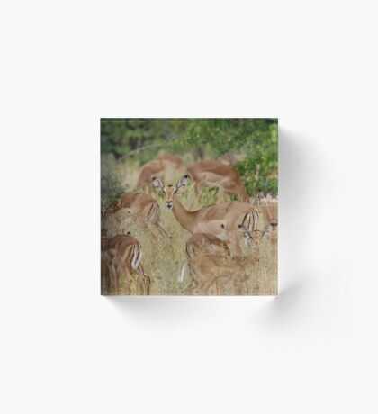 Come children, time to go! IMPALA – Aepyceros melampus melampus – ROOIBOK Acrylic Block