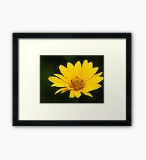 Golden Petals  Framed Print