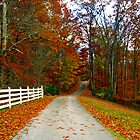 *COUNTRY ROAD* by Van Coleman