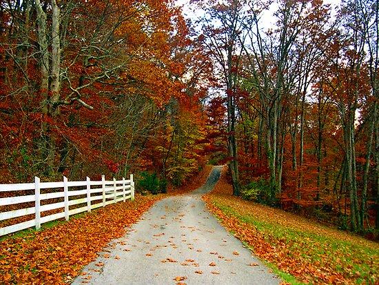 *COUNTRY ROAD* by Van Coleman