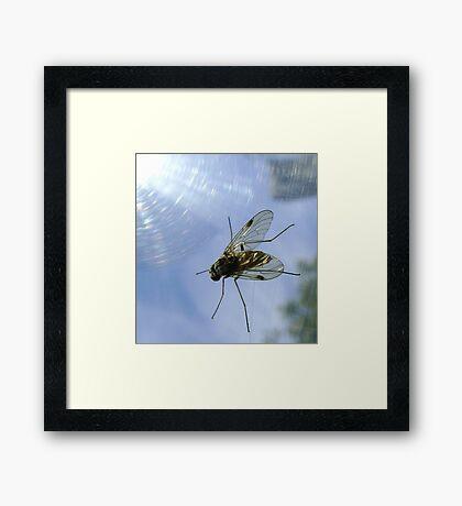fly, reflecting Framed Print