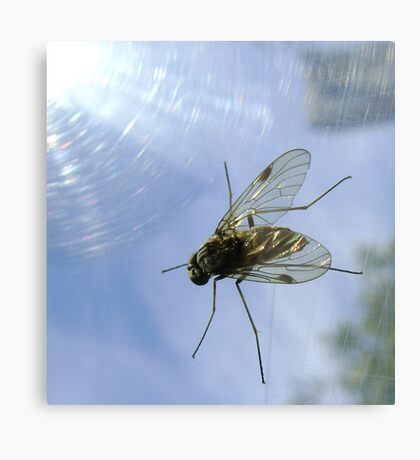 fly, reflecting Metal Print