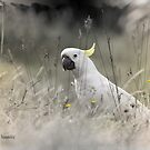 Sulphur Crested Cockatoo by Chris Armytage™