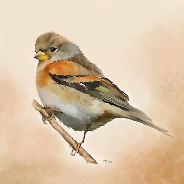 Bird: Brambling by bamalam-art
