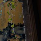 Solarized Window by Jen Waltmon