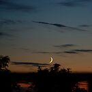Jackson Moon  25/06/2009  22:57 by dougie1