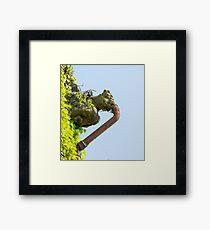 Gagged Gargoyle Framed Print