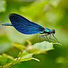 Neuroptera by Sunil Bhardwaj